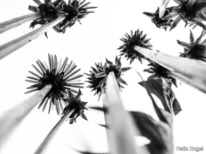 Minimalphotografie von Felix Engel